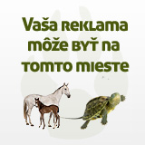 Vaa reklama me by na tomto mieste