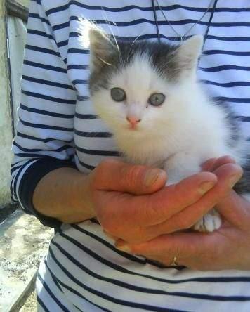 Černobílé koťátko
