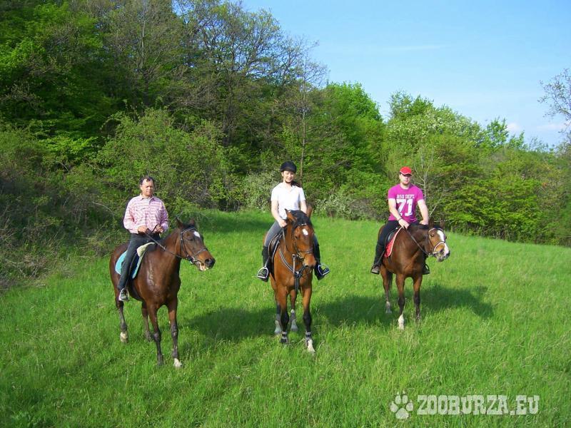 Jazdenie na koňoch