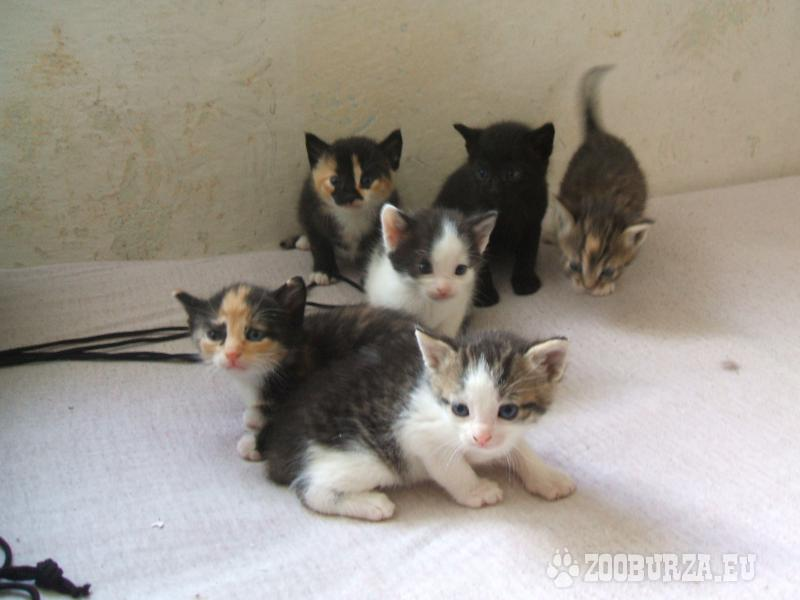 Prodám koťata