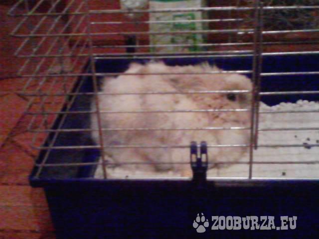 Teddy zajac