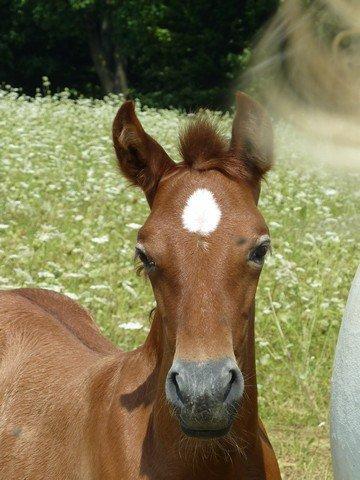 Andalúzske kone