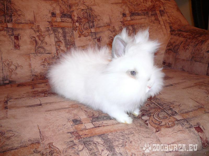 Mini zajačik