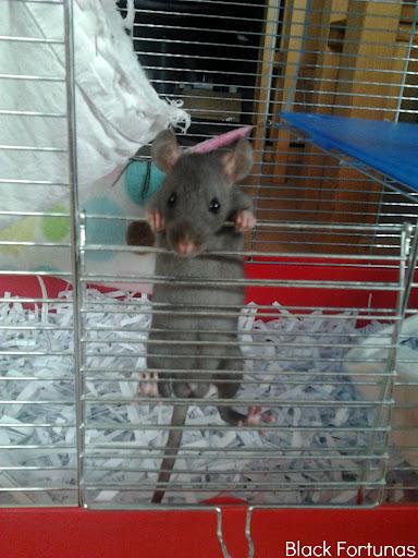 Potkaník s PP