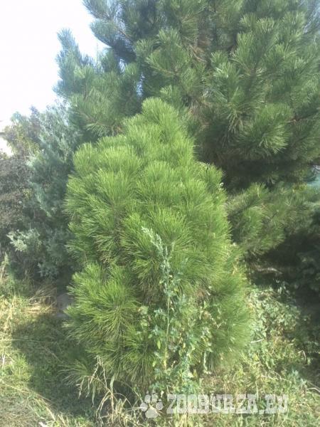 Rôzne dreviny, stromy