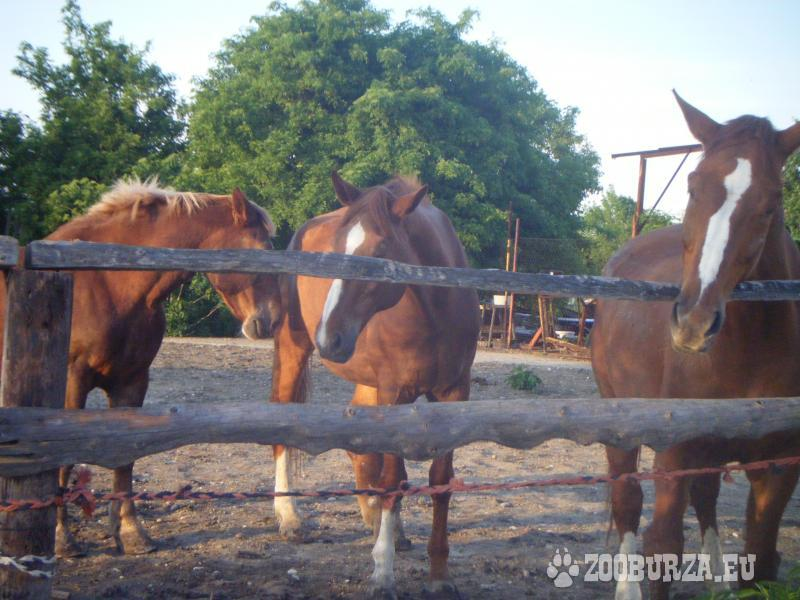 Ustajnenie koní, kurzy jazdenia, hipoterapia