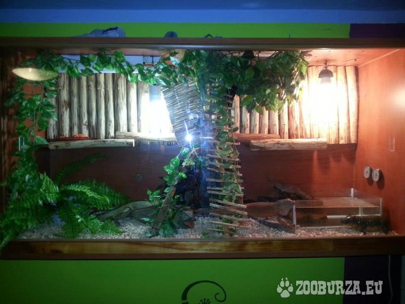 Leguan hnedy