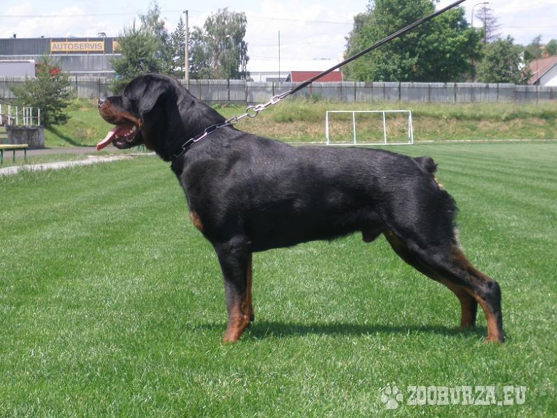 Rottweiler - ponuka na krytie
