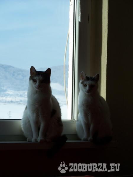 darujem kocúrika a mačičku