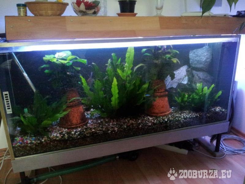Akvárium 240 litrové