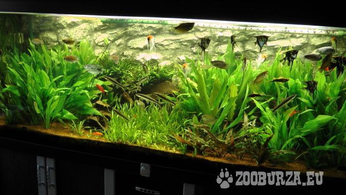 840 L akvarium