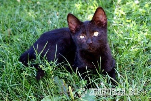 Darujem 7-mesačné mačky do dobrých rúk a10883c964e