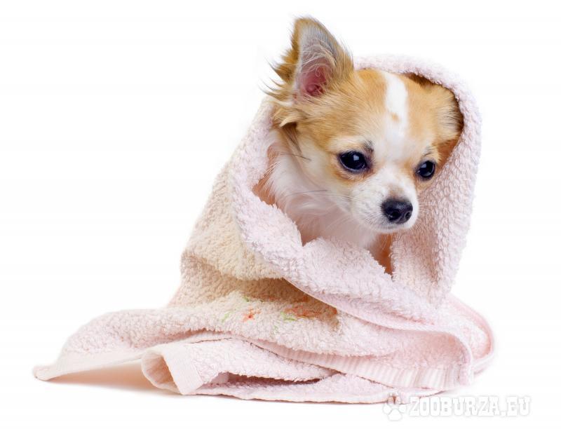 Strihanie a úprava psov