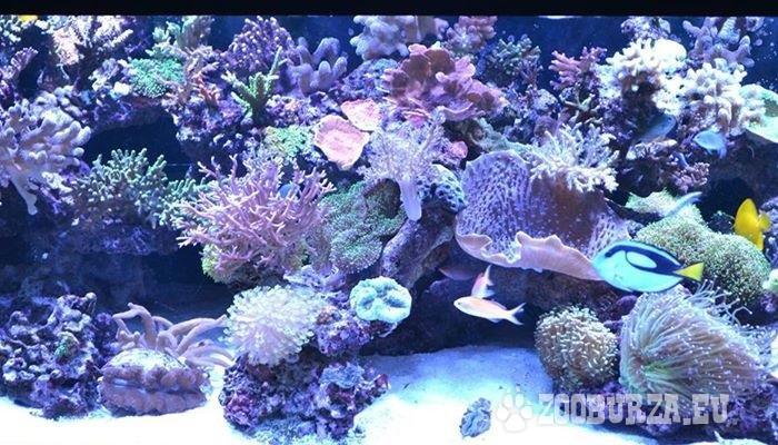 Morské a sladkovodné akváriá, záhradné jazierka