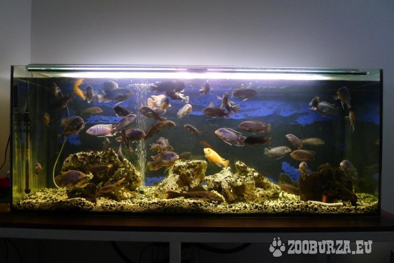 Predám komplet 360 L akvárium s rybičkami
