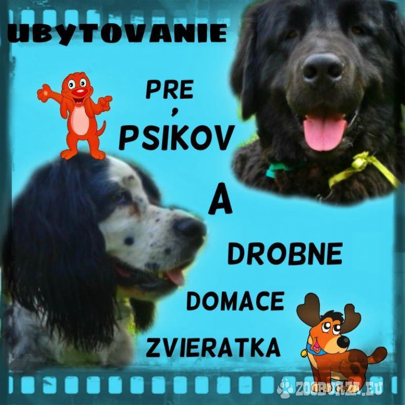 Ubytovanie pre psov a drobné domáce zvieratká