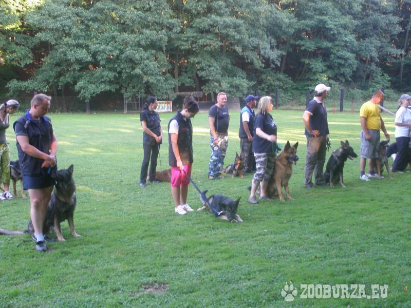 Jarný kurz výcviku psov.
