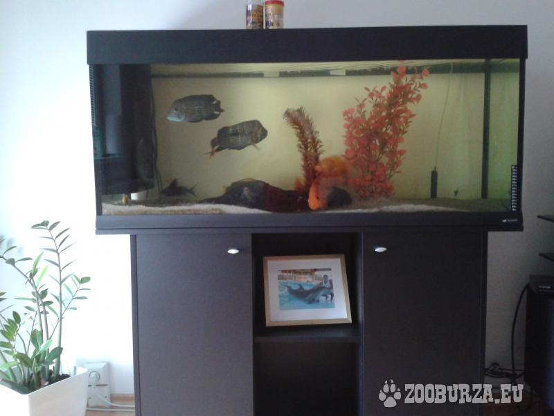 Akvárium 240 litrov, komplet vybavené