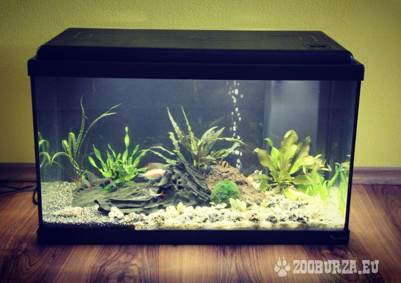 Aquarium KOMPLET, 60 L, NOVÉ , ŽIVÉ RYBY/ RASTLINY