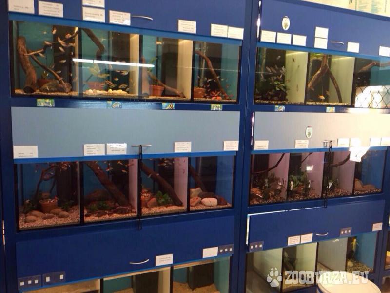 Akváriová stena