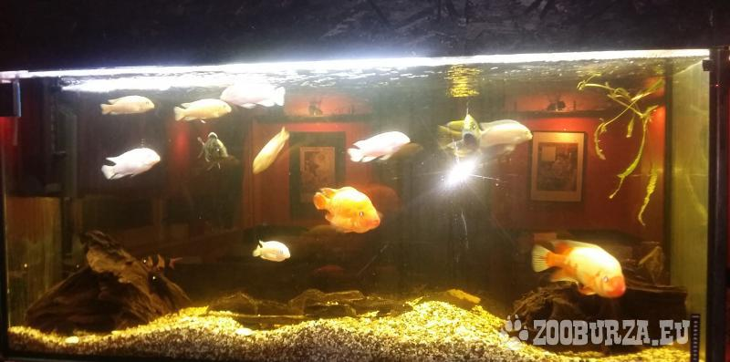 Predám kompletné akvárium