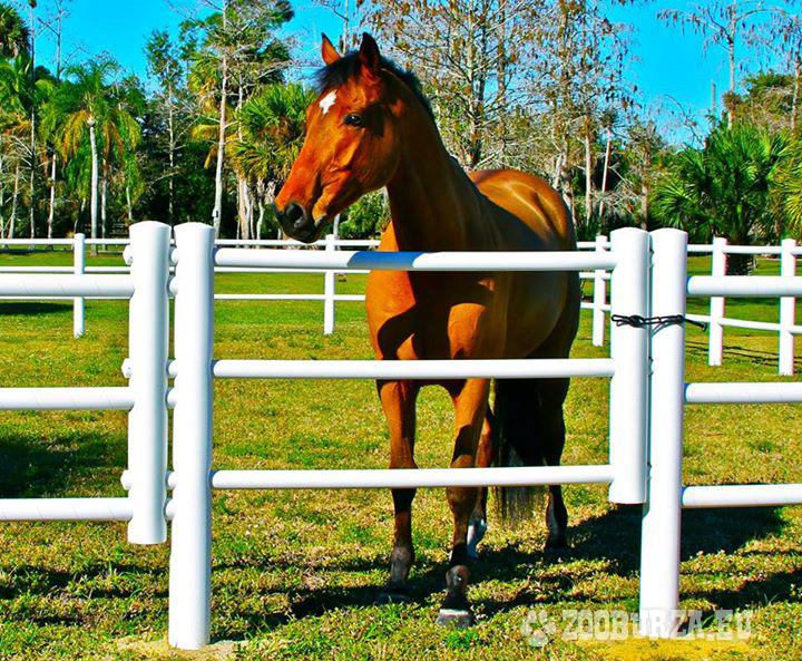 Equisafe Electric Fencing For Horses Hdpe