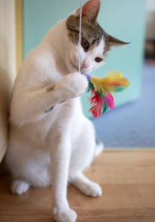 Cat sitting - postarám sa o mačku u vás doma