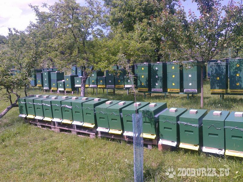Predám včely a včelie odložence !