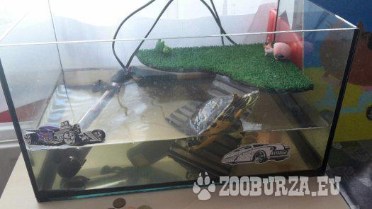 korytnačka písmenková s akvárkom