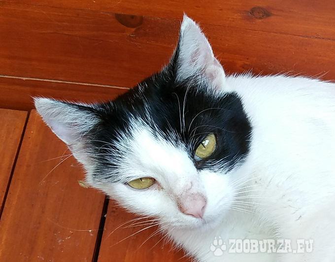 Mačička Micka
