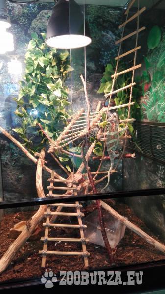 Terarium+chameleon