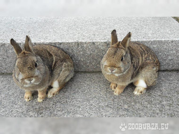 Bytové králiky na predaj - Jedinečná farba