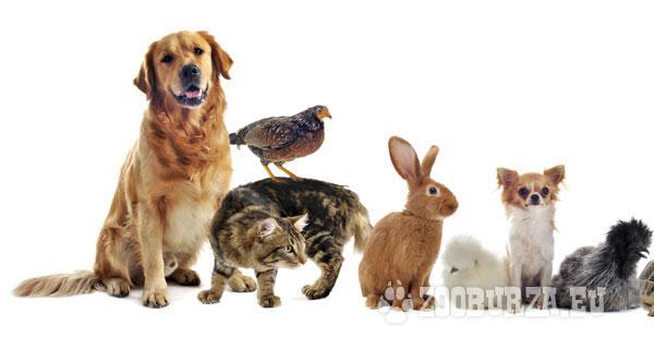 Stráženie zvierat
