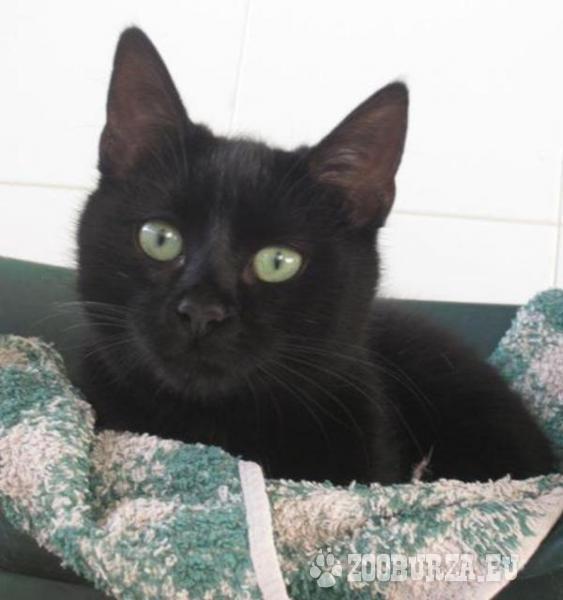 Katze schwarz zu vermitteln