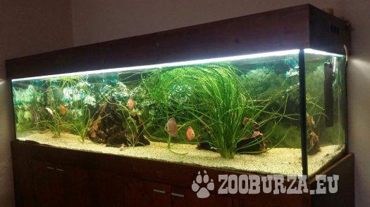 Akvarium komplet
