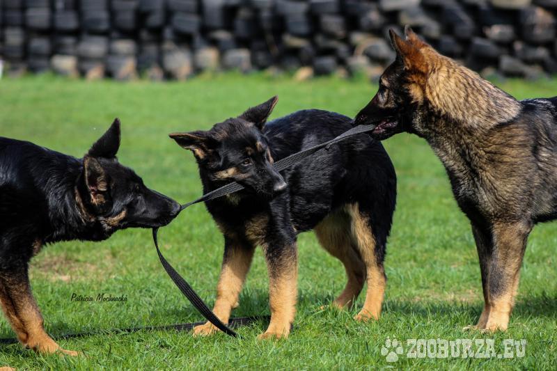 Výcvik pre Vášho psíka