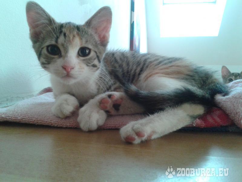Darujem 14-týždňové mačiatka, jedno alebo dve