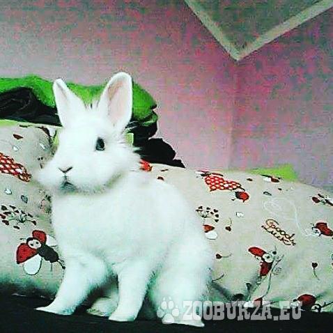 darujem samičku králika