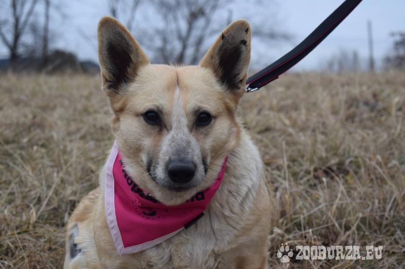 Ester hľadá nový domov – na adopciu
