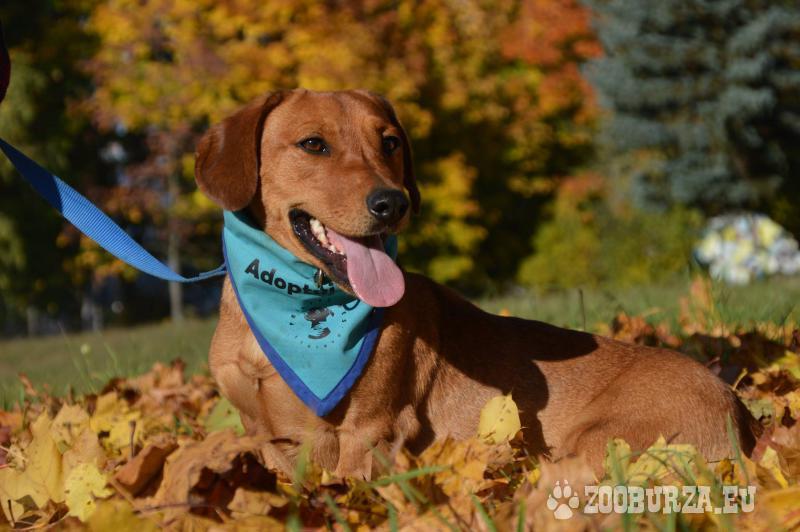 Franklin hľadá nový domov – na adopciu