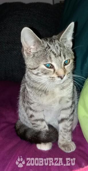 !!!Darujem mačiatka!!!