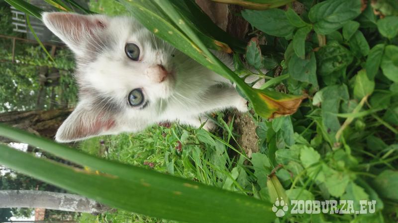 Darujem mačiatka