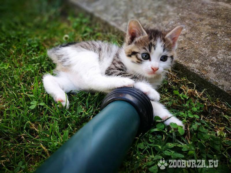 Darujem krásne mačiatko