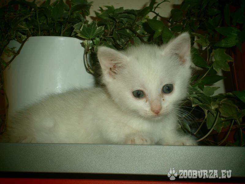 Mačiatka hľadajú domov