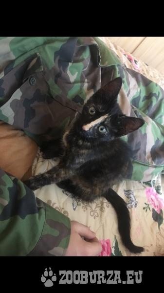 Darujem 3-mesačné mačiatko (mačka) do dobrých rúk