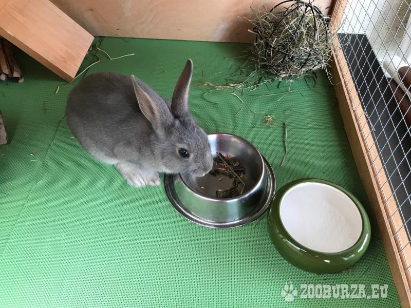 darujem trpaslíčieho králika