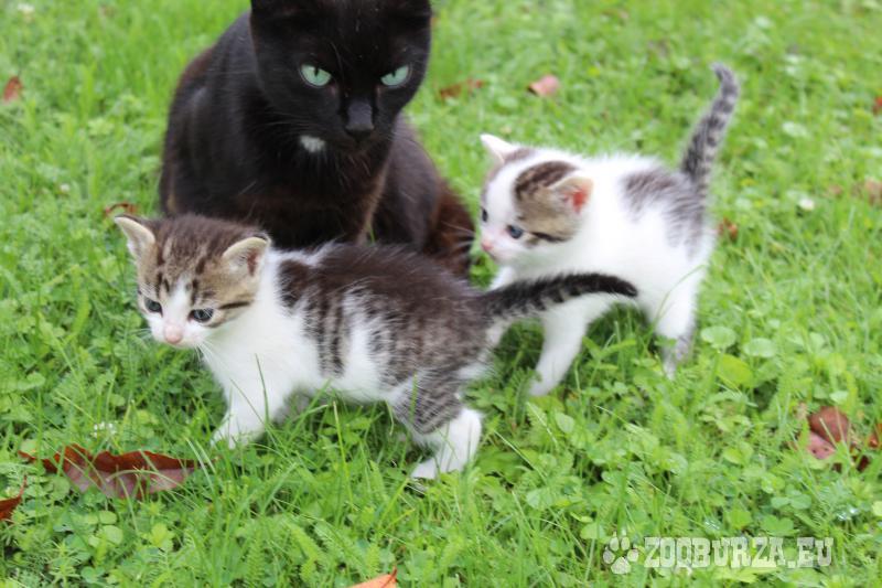 Darujem mačiatka do dobrých rúk - Darovanie a825e44eef1