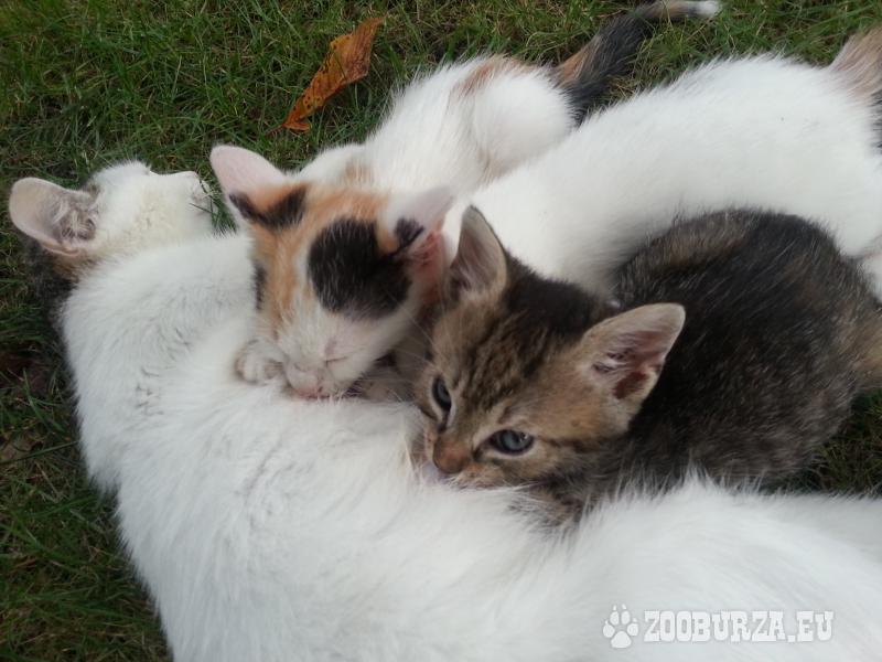 darujem maciatka