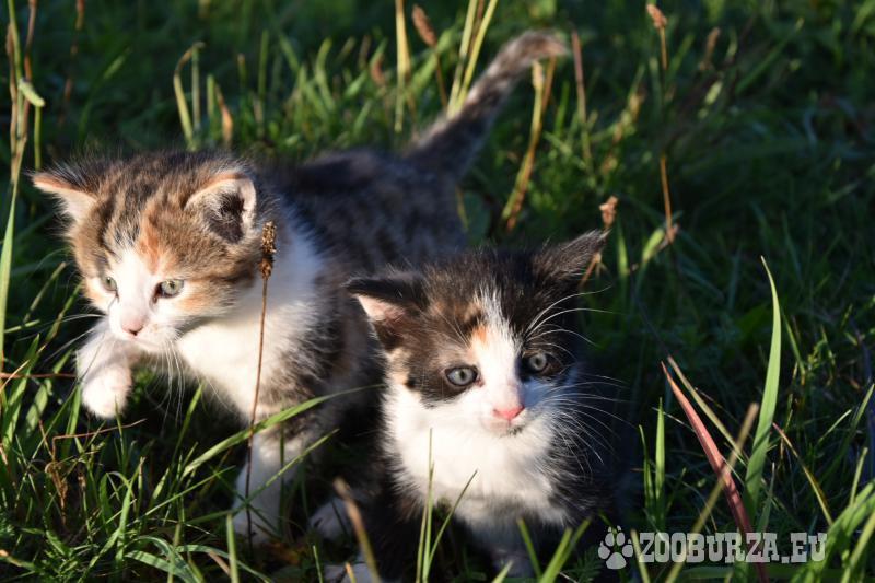 Darujeme koťátka