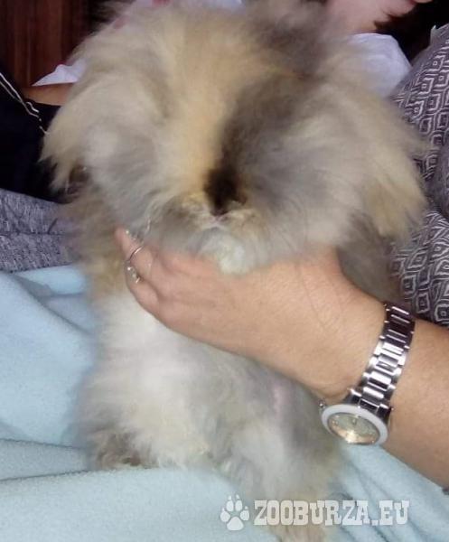 predam zakrsleho teddy zajacika